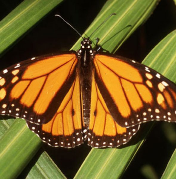TOURS OF THE MONARCH BUTTERFLY GROVE